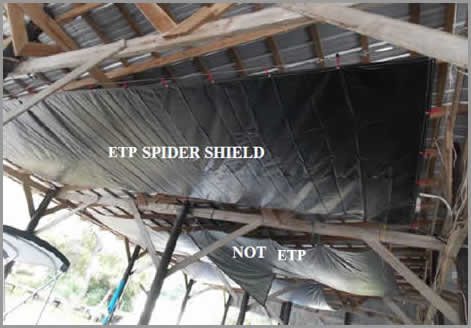 boat spider dropping shield
